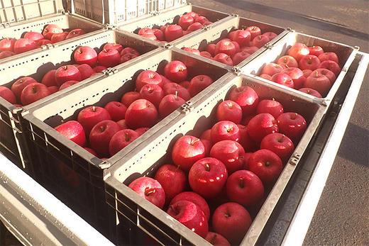 〈第3回 りんご通信〉りんごを追ってジュース製造工場に潜入!採れたて果実のおいしさを閉じ込める