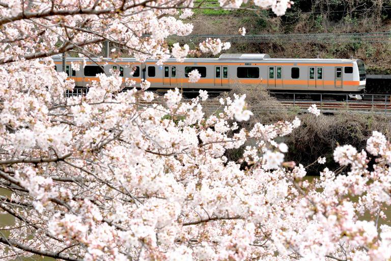 「4月はじまり」のワケ、「お花見」の由来など......新生活にお役立ち?! <春>にまつわる小ネタ&コミュニケーション術